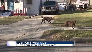 Little girl attacked by town dogs - Video