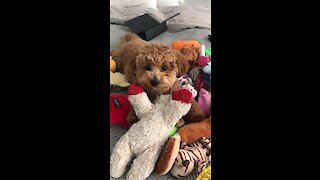 Puppy plays in pile of toys