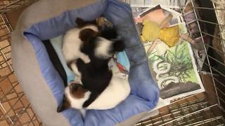 Puppy Sibling Rivalry - Video