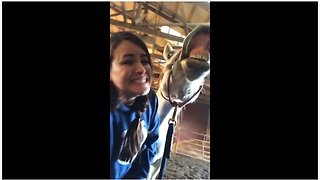 Horse Hilariously Smiles For The Camera On Command - Video