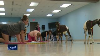 Omro community holds Goat yoga event - Video