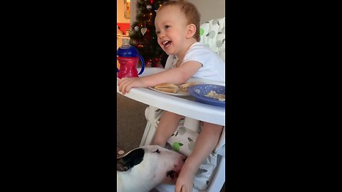 Laughing baby adorably gets feet tickled by dog