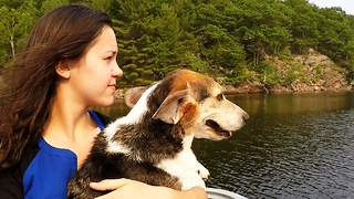 Beagle's ears flap like wings on family boat ride - Video