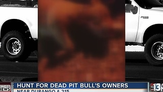 Pit bull killed by car, found with mouth tied up - Video