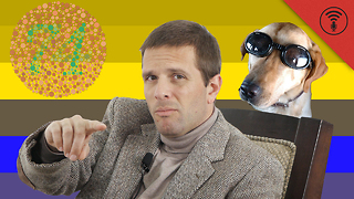 Check Out This Video To Find Out The Truth About How Dogs See Color
