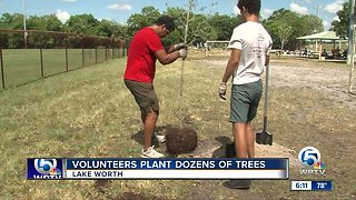 Dozens of trees planted in Lake Worth Beach