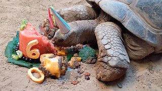 Turtley Awesome Birthday! Adorable Tortoise Enjoys 60th Birthday With Delicious Fruit Cake