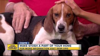 Rescues in Action: Meet Stosh , our June 11 superstar