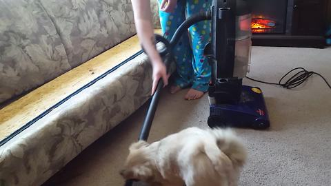 Small Dog Attacks Vacuum Cleaner