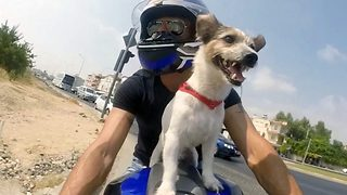 Real life Mutley – Dog rides on top of owner's bike - Video