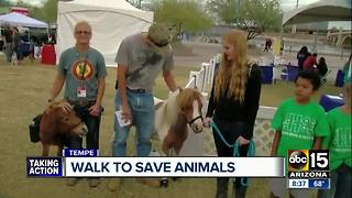 Walk to save animals taking place in Tempe - Video