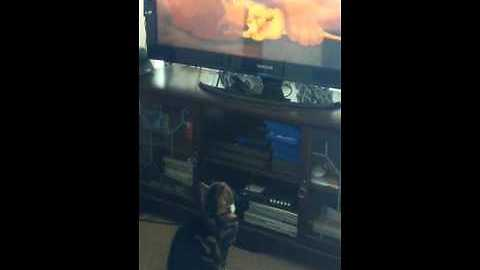 Emotional cat watches sad scene from 'The Lion King'