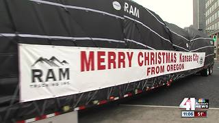 Mayor's Christmas Tree arrives at Crown Center