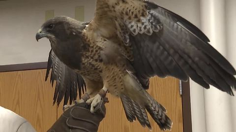 Raptor Fest helps celebrate 25 years of the Snake River Birds of Prey