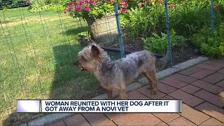 Woman reunited with pet who got away from vet - Video