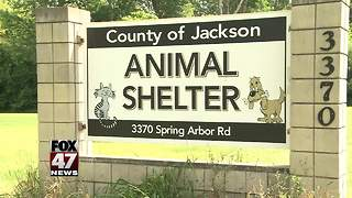 Jackson County Animal Shelter struck with Parvovirus scare