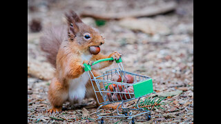 Squirrel eating nuts and jump animals tail