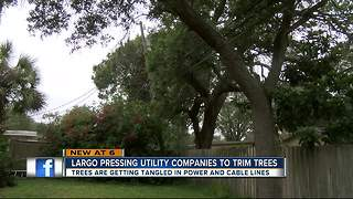 Largo leaders pressuring utility, cable companies to trim trees - Video