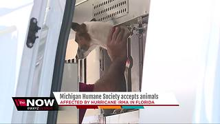 Michigan Humane Society Accepts Irma Animals - Video