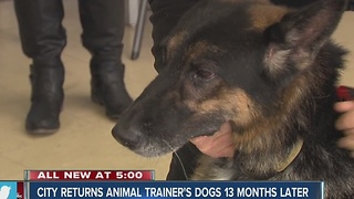 City returns animal trainer's dogs - Video