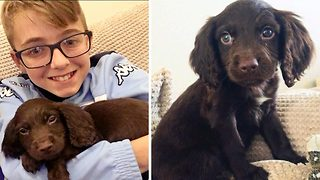 It's pawty time – Boy surprised with puppy for 11th birthday - Video