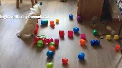 Toy Blocks' Vacation Destroyed By Ruthless Cockatoo