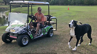 Funny Great Dane Working Dogs Supervise Yard and Pool Work  - Video