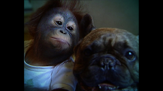 Cute Animal Odd Couples - Video