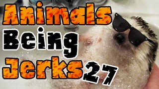 Animals Being Jerks #27 - Video
