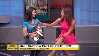 Rescues in Action: Rainbow