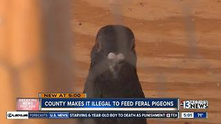 Clark County bans peopel from feeding pigeons - Video