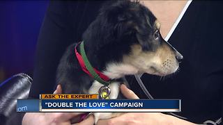 Humane Society spreads support through Double the Love Campaign - Video