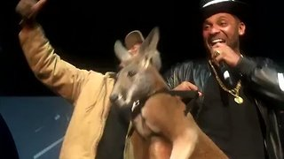 Comedian Accused of Animal Cruelty After Bringing Leashed Kangaroo on Stage - Video