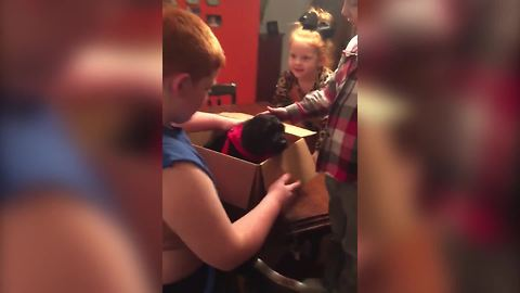 Young Boy Gets A Puppy For His Birthday But It Pukes On Him