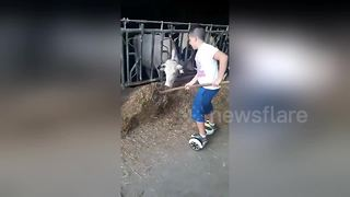 Boy feeds cows on a hoverboard - Video