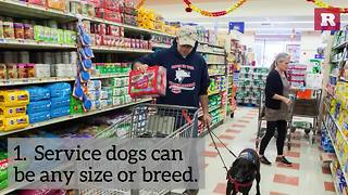 5 Facts About Service Dogs | Rare Animals - Video