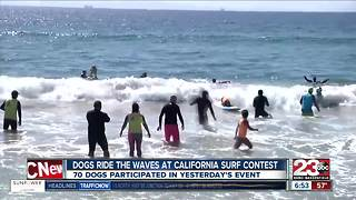 Dog surfing event in Huntington Beach Saturday - Video