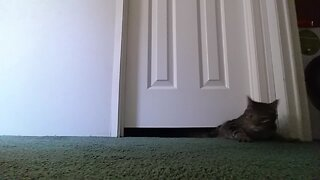 Kitty Wiggles his way under a Door