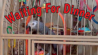 Parrot Makes Menu Requests While Imitating Sound Of Metal Utensils