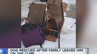 Dog rescued after family leaves him at the curb - Video