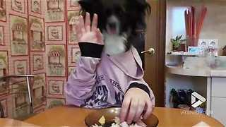 Dog has exceptional table manners - Video