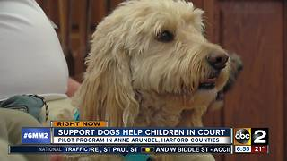 New program allows kids to have supports dogs in court - Video