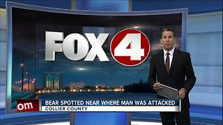 Bear spotted in Naples after attacking man - Video