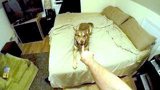 Dog expresses dislike of owner's rude behavior - Video