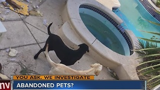 Woman says her neighbors are abandoning two Labrador Retrievers - Video