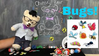Learn about Bugs with Chumsky Bear | Science | Insects | Educational Videos for Kids