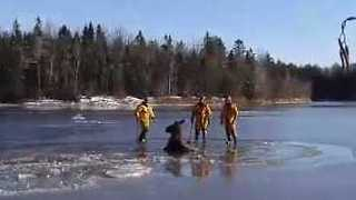 Firefighters Venture Onto Ice to Save Stranded Moose - Video