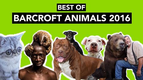 Best of Barcroft Animals 2016