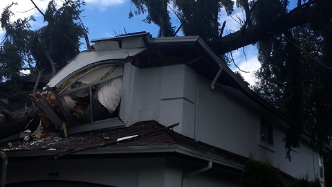 Giant Tree Crashes Through House During Windstorm in Vancouver