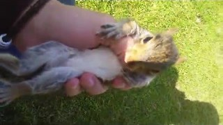 Little Squirrel Loses his Family, Decides to Live With Humans - Video